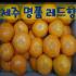 레드향 (20년12월말 수확예정)